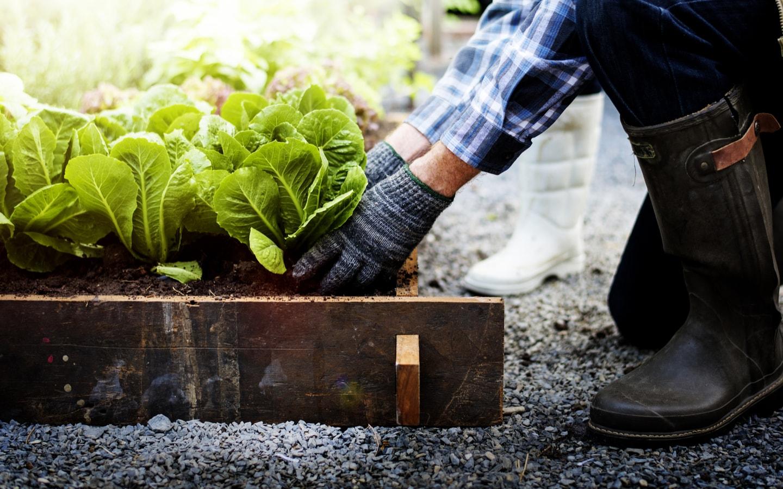 outdoor veggie garden