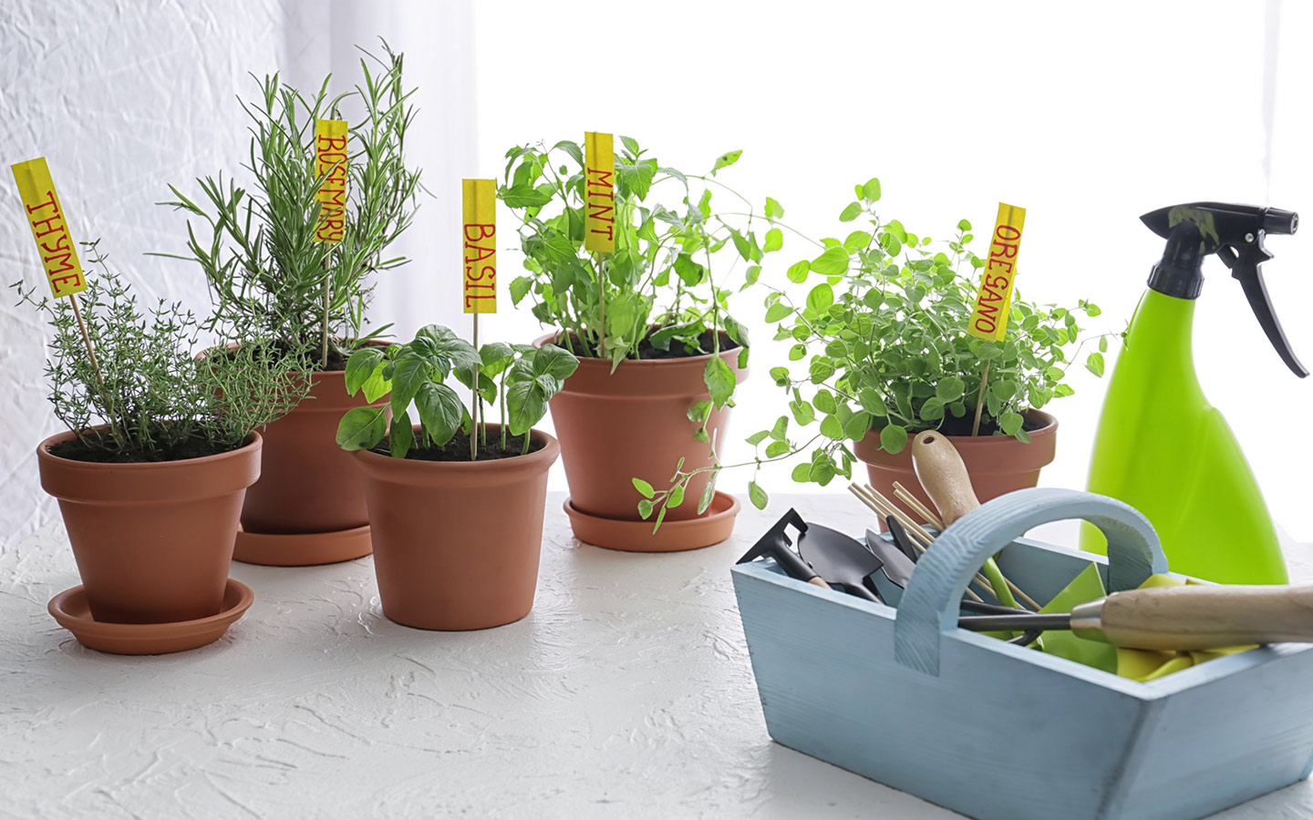 An array of tools that you need to farm in your home garden