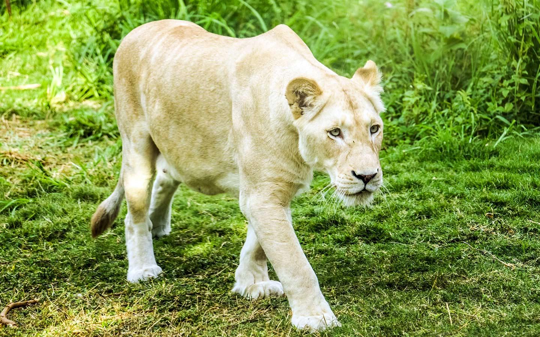 Dubai Safari Park: Opening Times, Tickets, Attractions