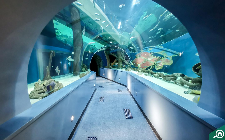 Sharjah Aquarium inside