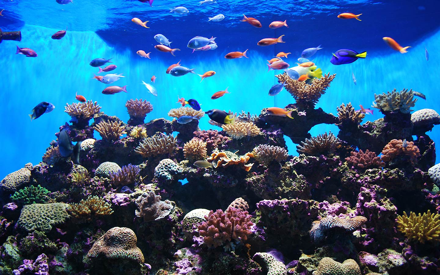 The Sharjah Aquarium is good for summers in Sharjah