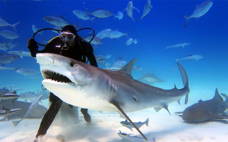 Shark encounter is the best activity in Dubai Aquarium & Underwater Zoo.