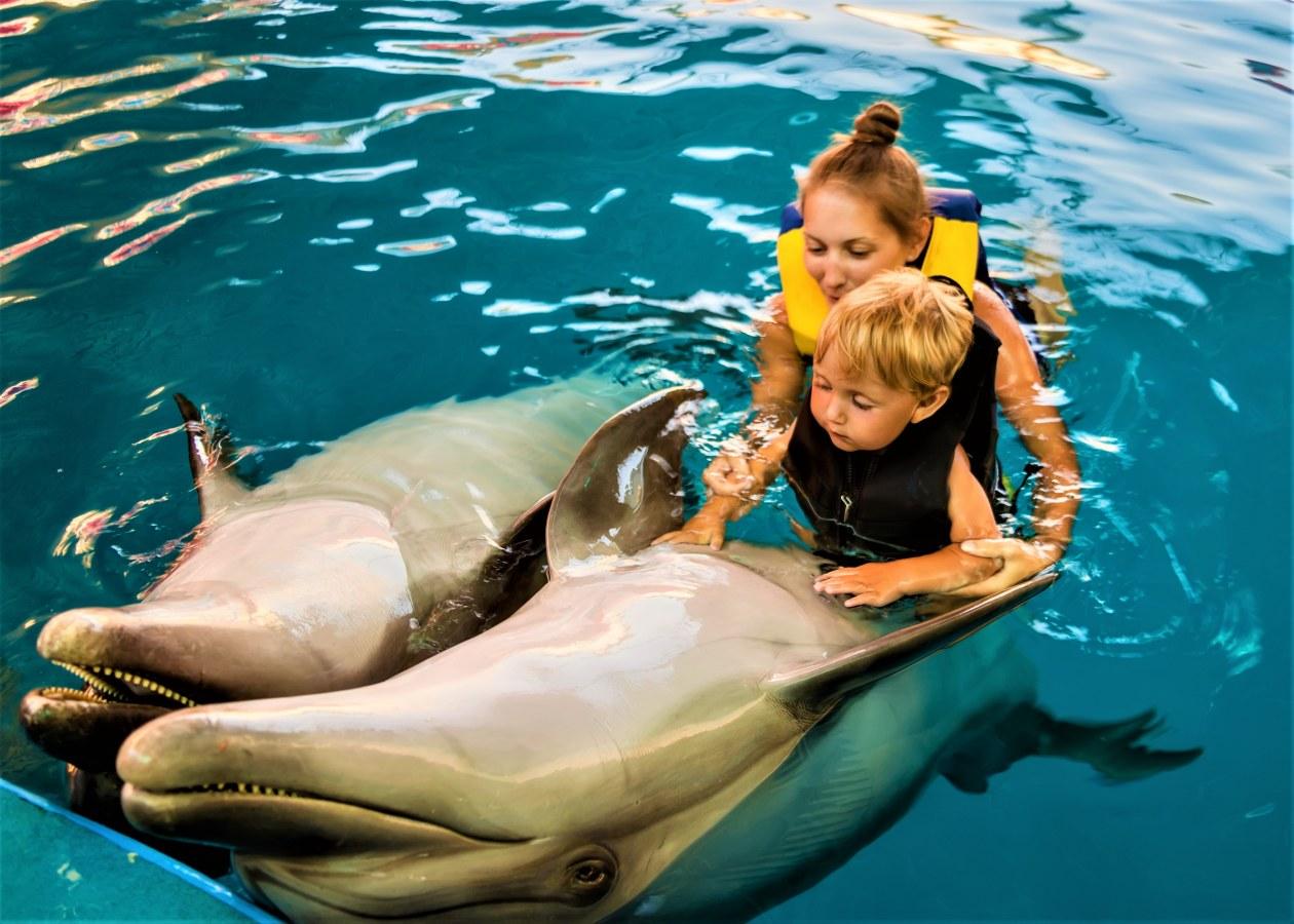 3D Мульт девка на дельфине