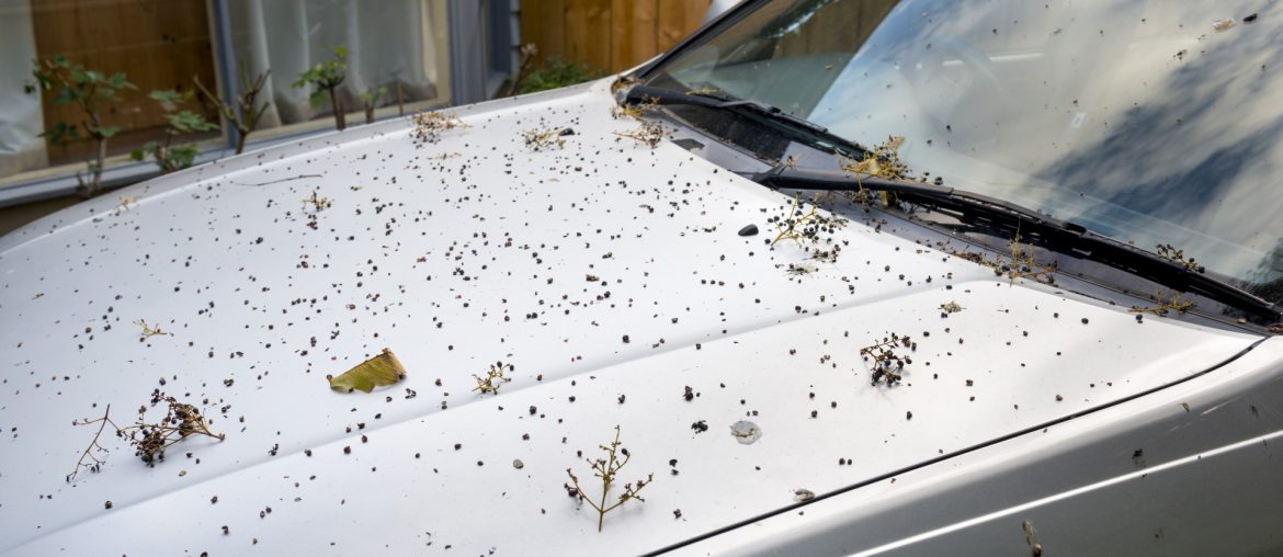 Debris from trees on parked car