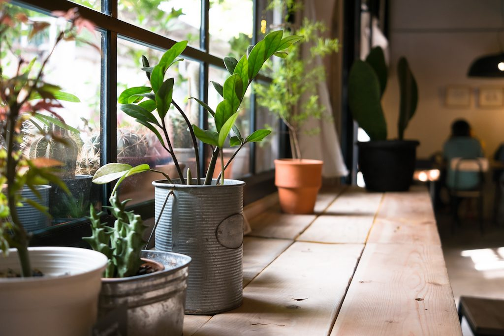 Go Green: How to Decorate Your Home Environmentally Friendly