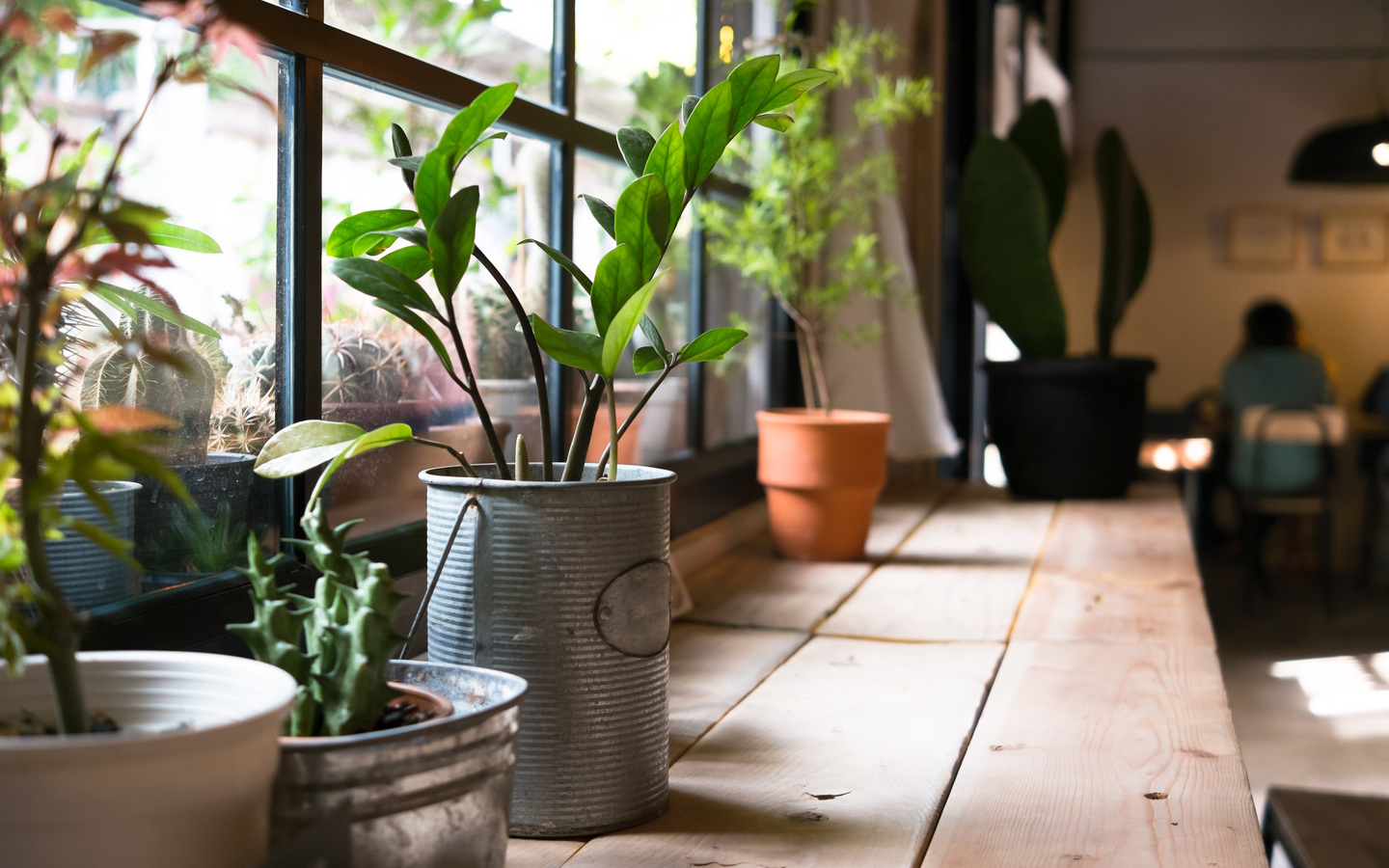 Increase the value of your home by keeping plants there.