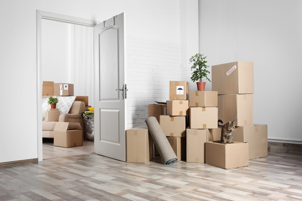 A large group of moving boxes in an empty apartment with another group of boxes in the next-door room