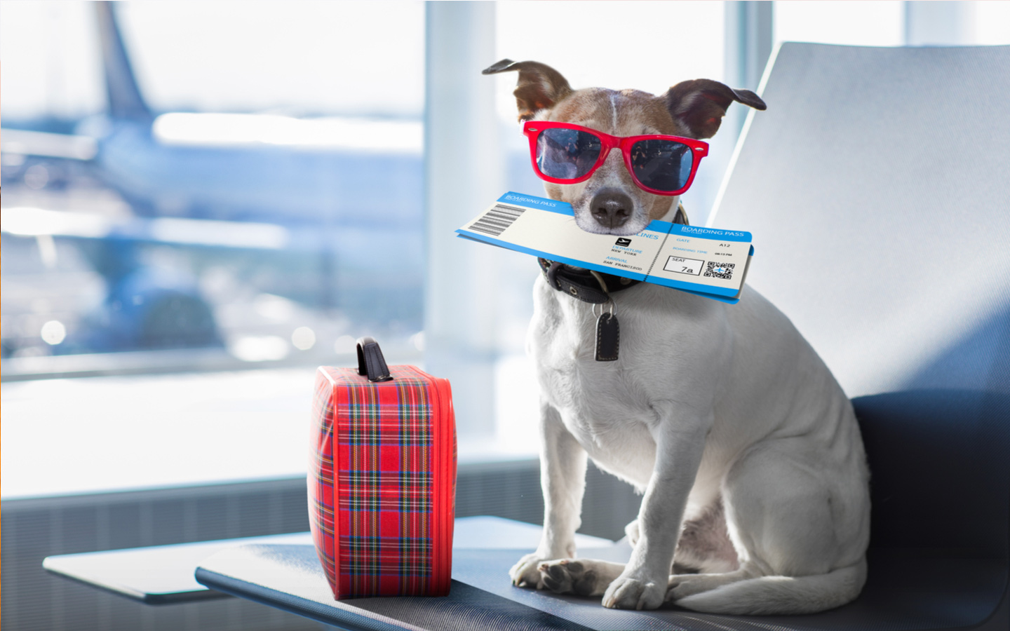 Pet Relocation Guide - How To Bring Your Pet To Dubai? - MyBayut