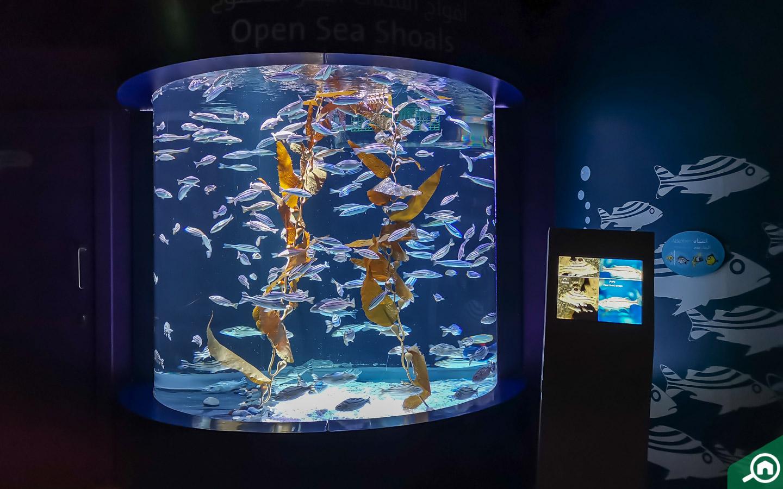 small fish aquarium