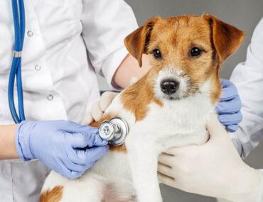كلب عند الطبيب البيطري